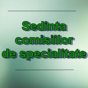 Ședința comisiilor de specialitate