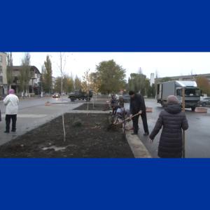 Primăria Căușeni plantează arbori și arbuști pe teritoriu urbei